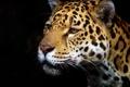 Картинка профиль, морда, хищник, ягуар, тёмный фон