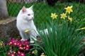 Картинка кошка, животные, кот, цветы, фото