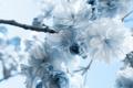 Картинка макро, цветы, ветка, голубые