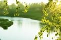 Картинка закат, речка, берёза