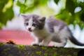 Картинка котёнок, мох, малыш