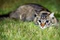 Картинка трава, глаза, котенок, Кошка, милый, grass, kitten