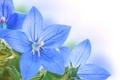 Картинка цветы, листики, голубые цветочки