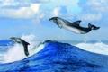 Картинка море, облака, брызги, волна, горизонт, дельфины