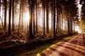 Картинка природа, лес, свет, дорога