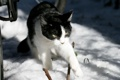 Картинка зима, ч/б кошка, снег, солнце