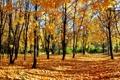 Картинка осень, лес, листья, деревья, природа, парк, листва