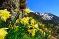 Картинка небо, цветы, горы, природа