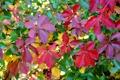 Картинка осень, листья, макро, ветки