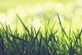 Картинка трава, Макро, зелёная