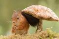 Картинка гриб, мох, белка, рыжая, подберезовик