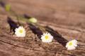 Картинка солнце, макро, цветы, ромашки, тень
