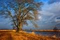 Картинка дорога, поле, облака, деревья, канал