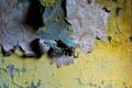Картинка стена, обои, текстура