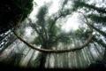 Картинка лес, небо, природа, деревья. листья