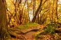 Картинка осень, лес, деревья, желтые листья