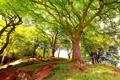 Картинка лес, деревья, пейзаж, природа, цветение, чудесный, Beautiful wood