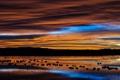 Картинка пейзаж, река, небо, природа, ночь, птицы
