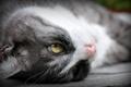 Картинка макро, взгляд, кошка