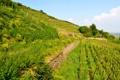 Картинка Alsace, трава, зелень, кусты, Франция, склон, плантации