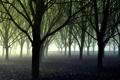 Картинка лес, деревья, туман, посадки