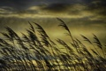 Картинка трава, солнце, облака, стебли, куст