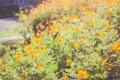 Картинка бабочка, оранжевые, цветы