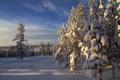 Картинка зима, небо, снег, деревья, природа, фото