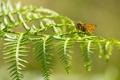 Картинка макро, природа, лист, бабочка