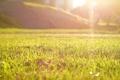 Картинка зелень, трава, макро, лучи, свет, парк, Солнце