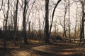 Картинка лес, забор, дорога