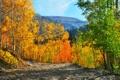 Картинка осень, лес, небо, деревья, горы