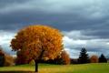 Картинка осень, небо, дерево, газон