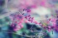 Картинка цветы, Питер, сад