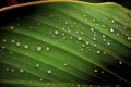 Картинка капли, лист, after rain