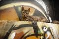 Картинка кошка, стена, граффити, лежит, смотрит