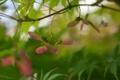 Картинка природа, дерево, ветка