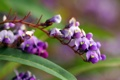 Картинка цветы, ветка, фиолет