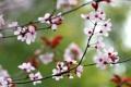 Картинка природа, весна, ветка, цветы