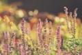 Картинка цветы, лепестки, сиреневые