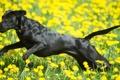 Картинка собака, поле, лето