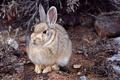 Картинка ветки, камни, мох, кролик