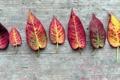 Картинка листья, осенние, дерево
