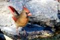 Картинка птица, камень, цвет, перья, клюв