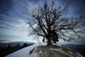 Картинка зима, little church, дерево