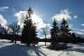 Картинка небо, солнце, снег, ёлки