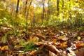 Картинка осень, лес, листья, хвощ