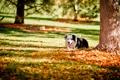 Картинка осень, парк, друг, собака