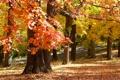 Картинка осень, парк, November in Missouri
