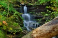 Картинка лес, деревья, водопад, поток